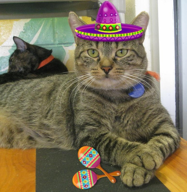 9 best images about MEXICAN KITTY CATS<3 on Pinterest | Cats ...