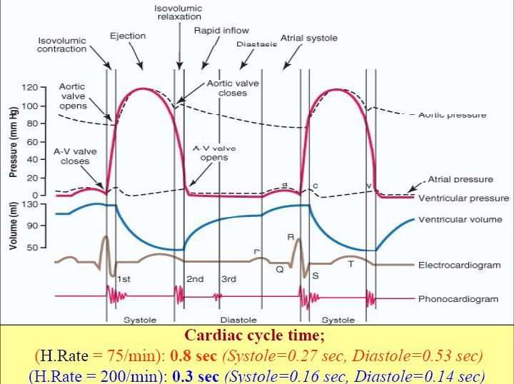 The 25 best cardiac cycle ideas on pinterest cardiac nursing cardiac cycle this is so informative wiggers diagram ccuart Gallery