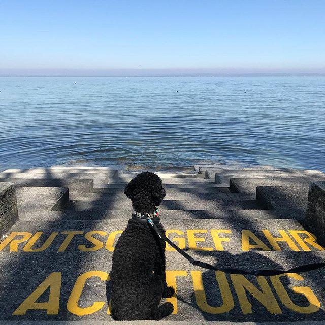 Rutschgefahr Achtung!  . . . #Arbon #See #Sonne #Schattenspiele #Horizont #Picasso #instadog #Frühling #sonnetanken #spaziergang #ig_ostschweiz #exploremore #switzerlandwonderland #ausflug #auszeit