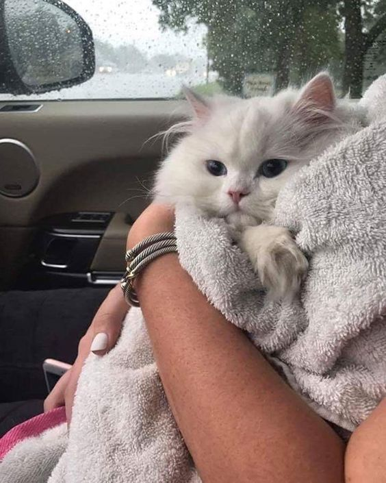 50+ cutest kittens make our lives better every single day. – Page 16 of 53