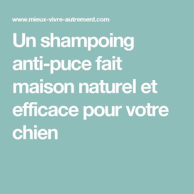 Un shampoing anti-puce fait maison naturel et efficace pour votre chien