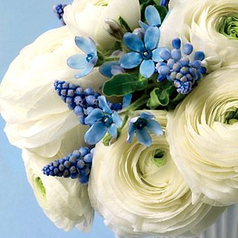 white ranuculus with blue accents...i could see this with a yellow bridesmaids dress.  can't we get married all over again?