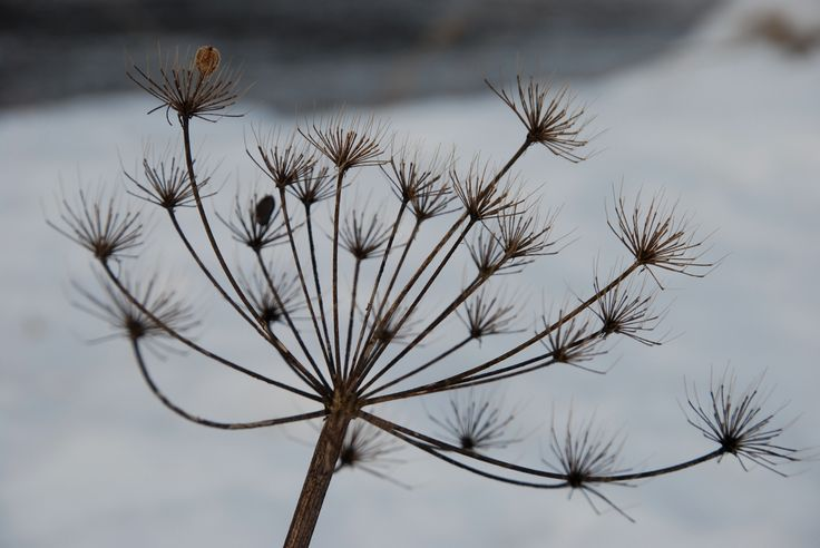 how to draw a seed head