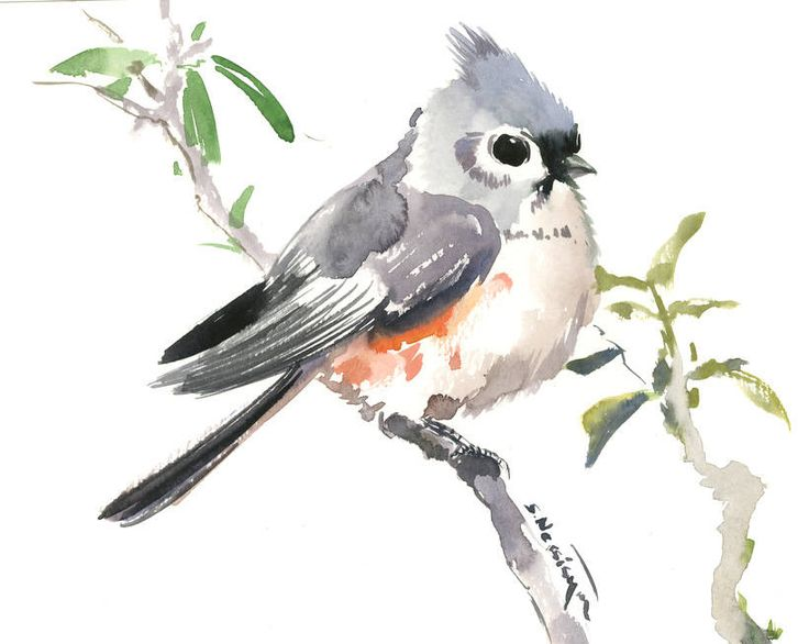 Titmouse, original watercolor painrting,10 x 8 in, nursery art, kids wall art, bird illustration original by ORIGINALONLY on Etsy