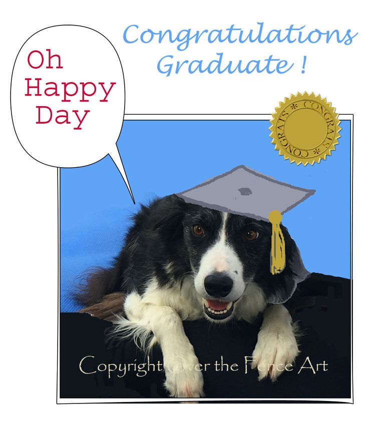 Graduation Greeting Card, Animal photography, Pet photography , Photo Greeting Card, Handmade, whimsical funny card by overthefenceart on Etsy