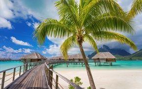 Обои пальмы, paradise, берег, palms, пляж, sea, песок, море, sand, shore, beach, summer, tropical