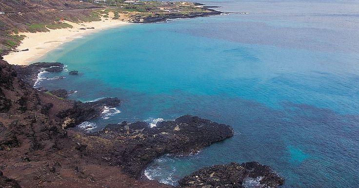 ¿Qué adapataciones tienen las plantas y animales que viven en biomas de agua salada?. El bioma de agua salada es un ecosistema de animales y plantas e incluye océanos, mares, arrecifes de coral y estuarios. Los océanos son salados, en ellos abunda el tipo de sal que se usa para las comidas, llamada cloruro de sodio. También hay otros tipos de sales y minerales que provienen de rocas de la tierra. Los animales y plantas han ...
