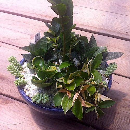 Indoor Succulent Shade Gardens: Recipes For Success