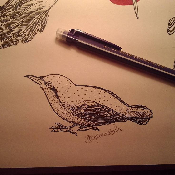 Sutta europea #animal #bird #illustration #linework #blackink #tattoodesign #original #art #cipananatalia #loveit #cute