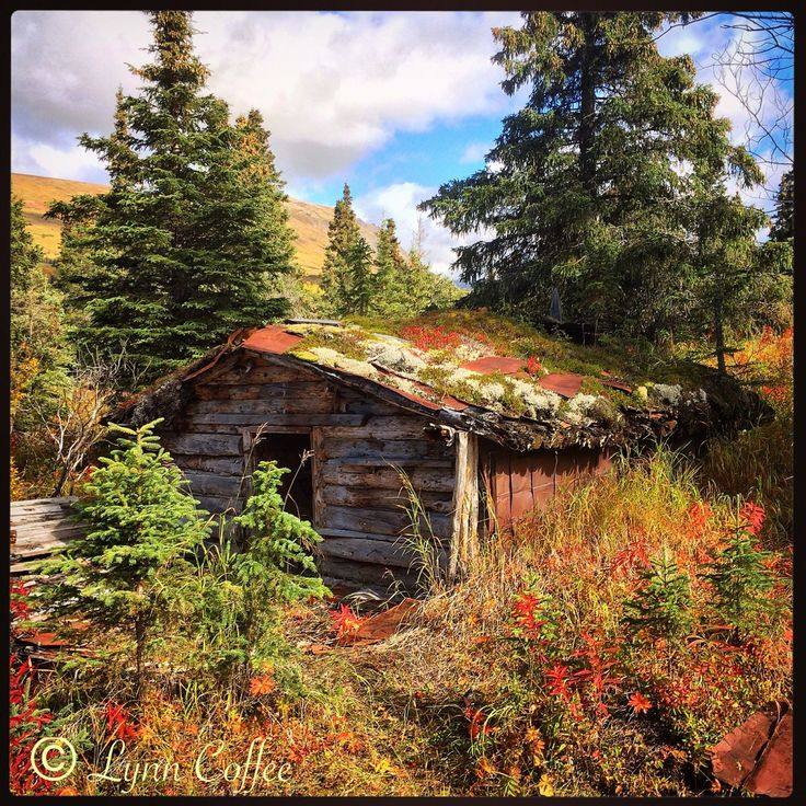 Abandoned trappers cabin willow alaska alaska 39 s beauty for Alaska cottage