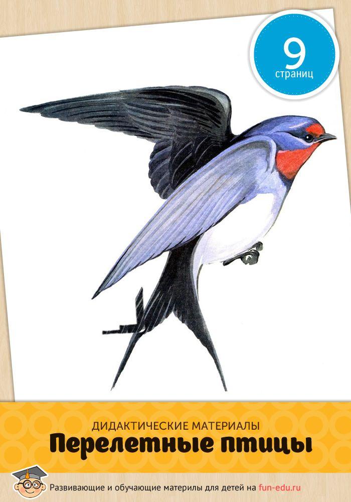 Птицы перелетные — картинки для детей, призванные открыть ученику принципы существования окружающего мира. Успешного обучения!