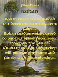 Fairy Tree - Rohan