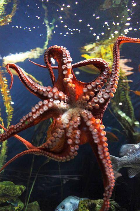 Best 25+ Octopus photo...