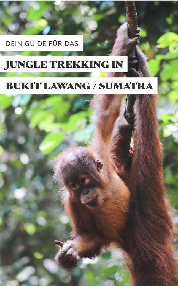 Dein Guide für den perfekten Dschungel-Trek in Bukit Lawang / Sumatra / Indonesien. Mit Packliste und den besten Tipps.