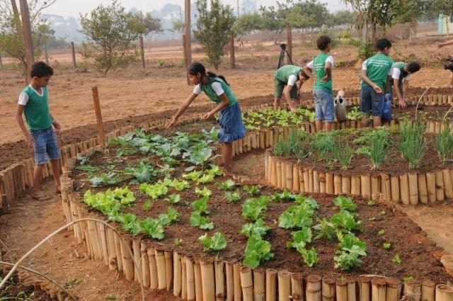 Projeto Poço de Carbono incentiva hortas escolares ~ Pauta Socioambiental