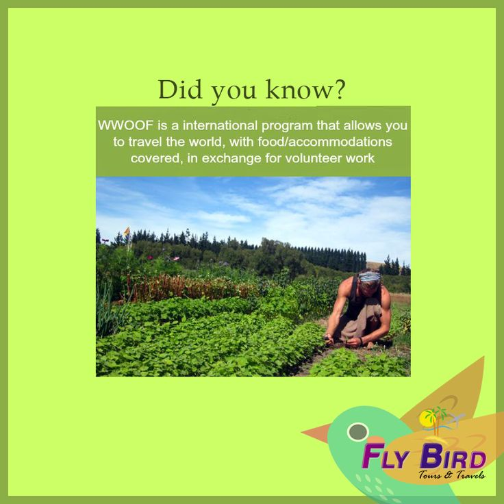 Did you know? #wwoof #travel #flybird