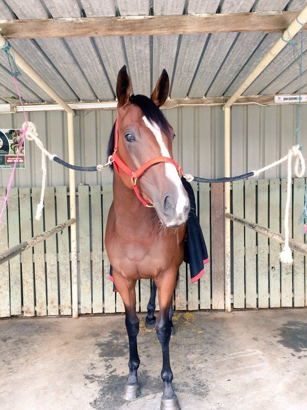 POP, looking relaxed before her race at Mornington 2/4/16.