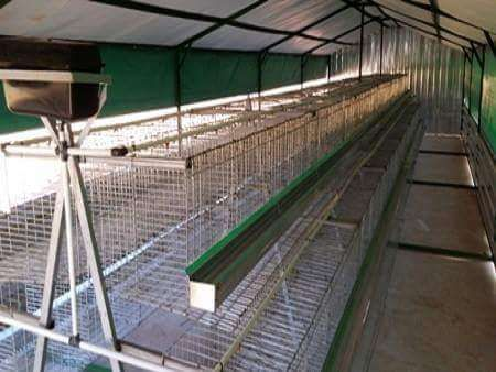 chicken Layer cages Krugersdorp - image 1