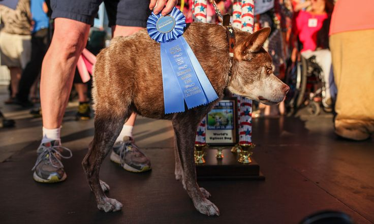 The ugliest dog competition - in pictures