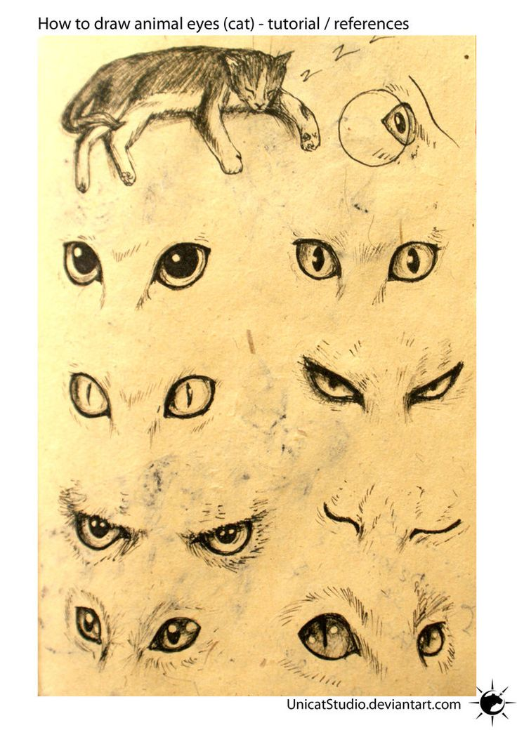 Animal Eyes Tuto by UnicatStudio on deviantART