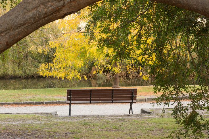 The tree frames the bench and creates a foreground. The beautiful autumn colours create the perfect backdrop