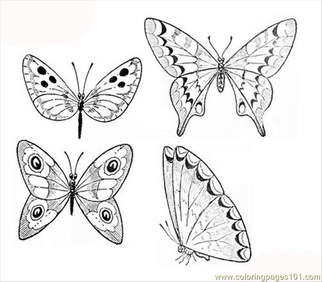 butterfly drawing easy methods how to draw butterflies - 650×570