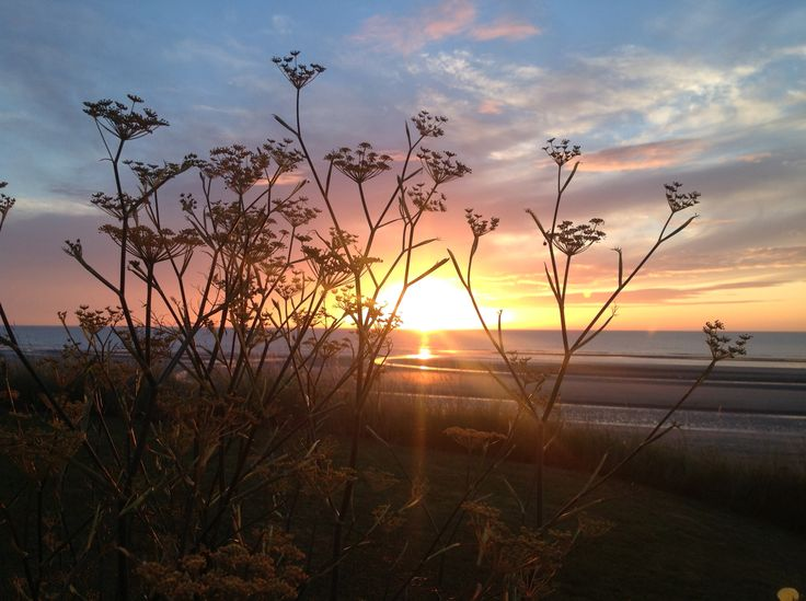 Autumn sunrise with fennel seed heads.