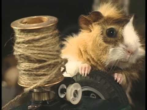 Hammy the Hamster Vol 1 Ep 2