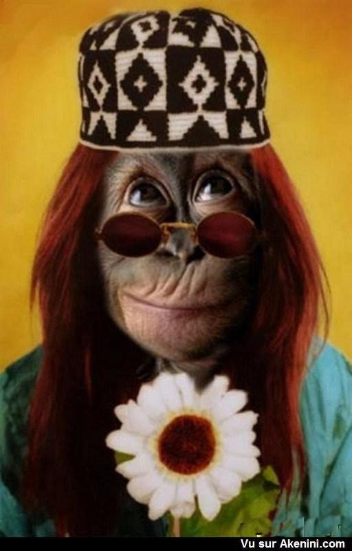 Singe rigolo - funny monkey