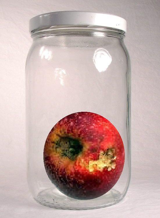 Here's a great idea for a long-term observation project. Get several clean PLASTIC jars and place a piece of FRESH fruit in each. (Use different kinds of fruit so you'll have some good comparisons.) Once a week for the rest of the school year, have students draw what they see and list the observable changes. I'd recommend having enough jars for students to work on this in groups of 3 or 4.