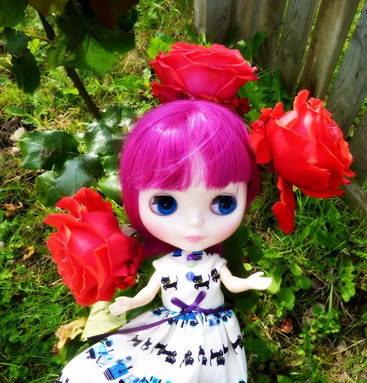 https://flic.kr/p/ydqpsK | Roses! (11/30--Flowers)