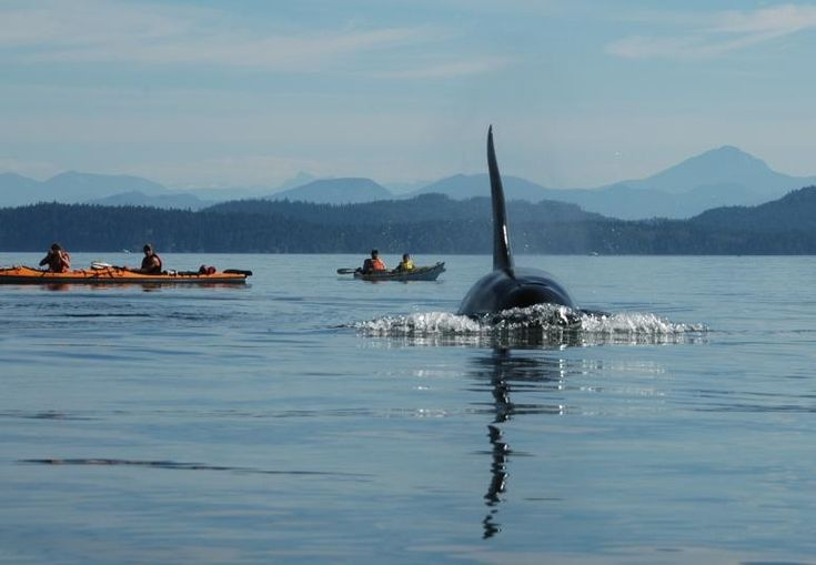 10 Adventures To Try In The San Juan Islands. Includes some things I haven't seen or thought of.