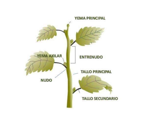 Que Son Las Plantas Partes Y Funciones De Las Plantas Plantas Botanica Naturaleza
