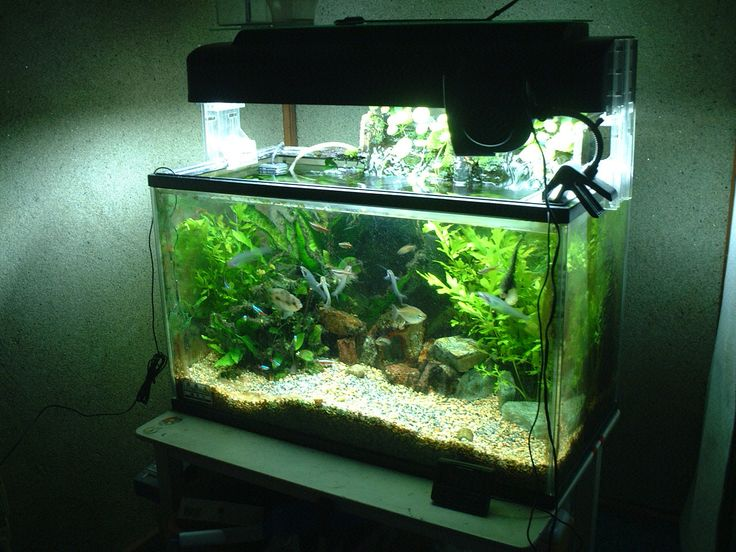 Awesome Fish Tank Decoration ~ http://www.lookmyhomes.com/amazing-fish-tank-decoration/