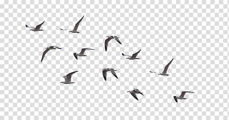 Birds Png Birdwatching In 2020 Flock Of Birds Bird Drawings Birds For Kids