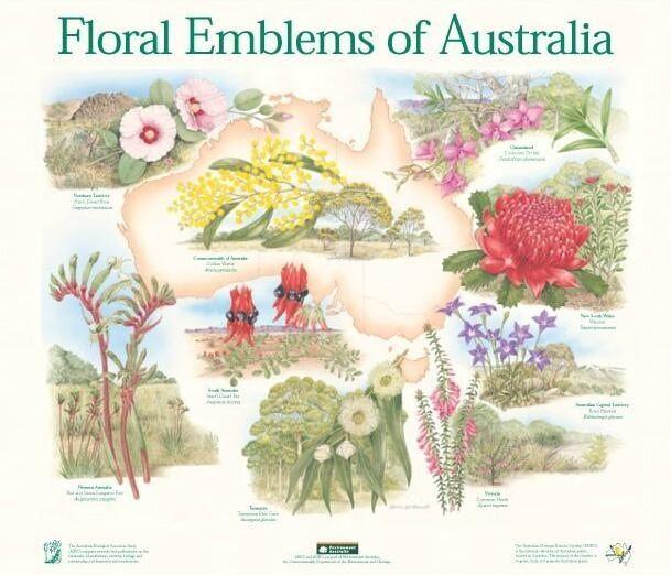 State floral emblems.