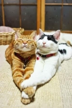 Cats in Love love cute animals cats pets lol…