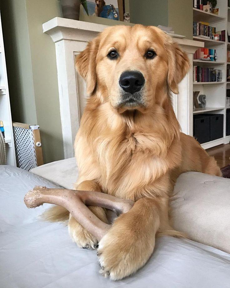 Park Art My WordPress Blog_Golden Retriever Puppies For Sale In Texas Under 1000