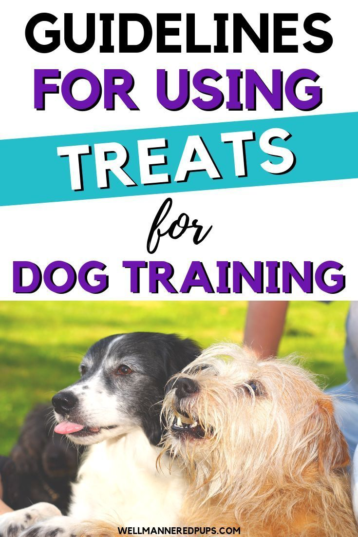 How To Choose And Use Treats In Training Your Dog Well Mannered Pups Dog Training Easiest Dogs To Train Best Dog Training