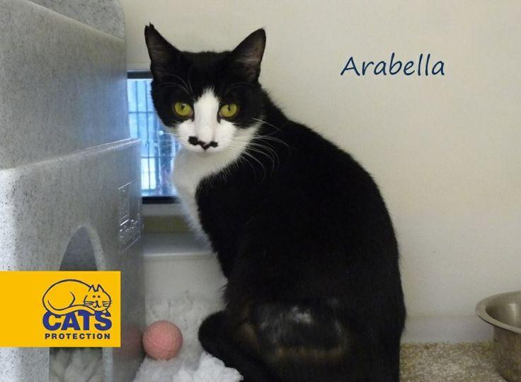 Arabella Cats, Animals, Derby