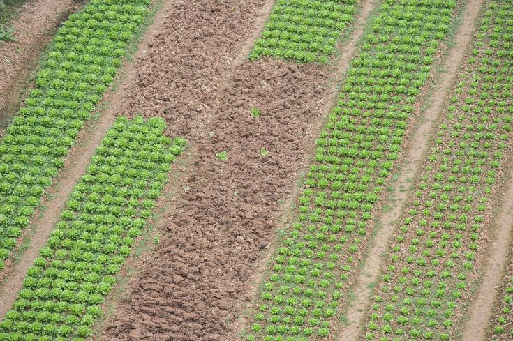 How farming with rocks could improve global food security