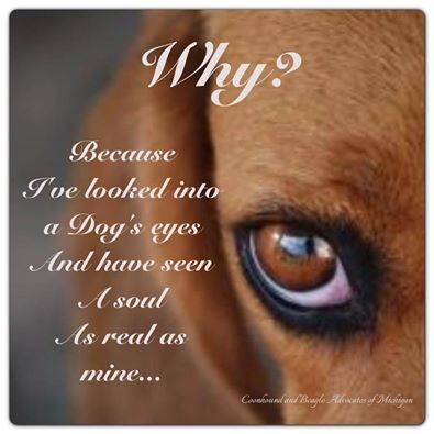 Why?  Because I've looked into a dog's eyes...