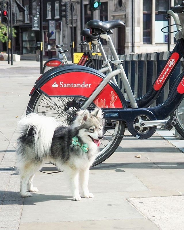 Why Aren T There Any Bikes For Doggos That We Can Hire