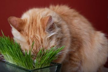 Indoor Plants That Are Safe For Cats For Cats Indoor