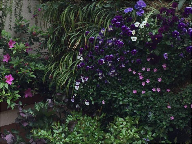 Detalle de pared vegetal en una terraza urbana en Madrid. Trabajo de Jardines y Rincones Paisajismo