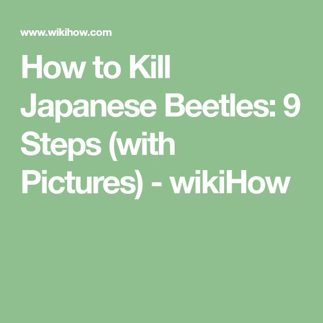 How to Kill Japanese Beetles: 9 Steps (with Pictures) - wikiHow
