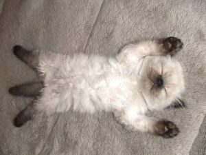 Having a rough day...this site will definitely cheer you up! Cutest Paw