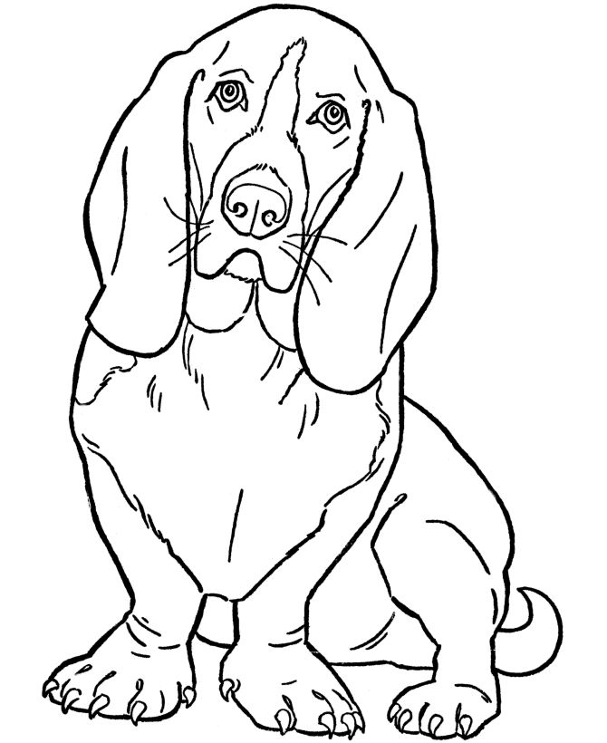 dog color pages printable | Dog Coloring Pages | Printable Basset Hound coloring…