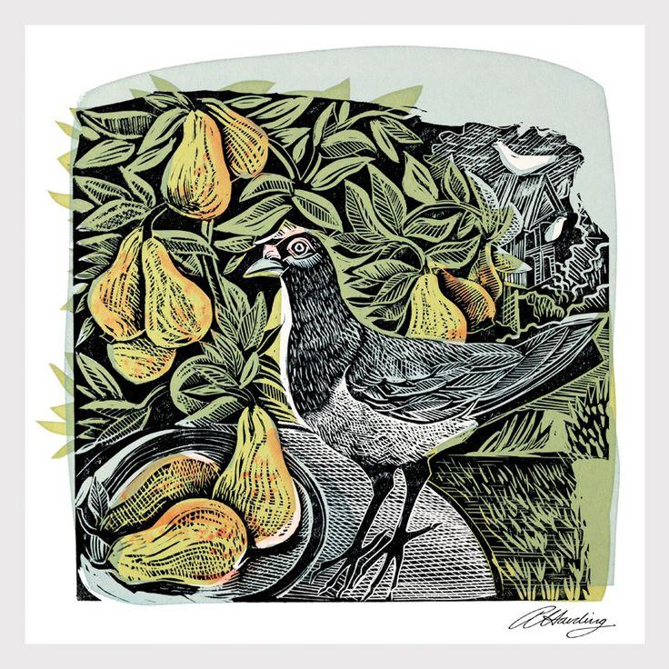 Angela Harding Paintings Prints And Illustrations Pigeon