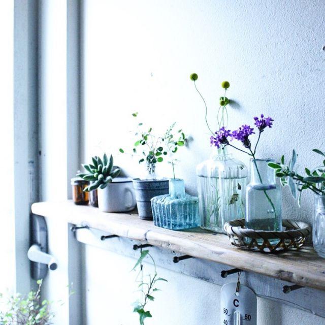 makoroさんの、棚,グリーンのある暮らし,植物のある暮らし,のお部屋写真